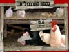 農場偷雞蛋