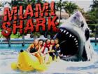 邁阿密鯊魚